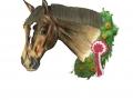 2olliehorse