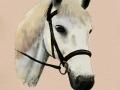 horseweb